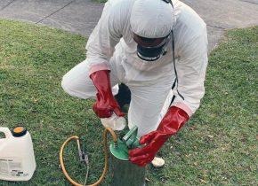 pest control pest management